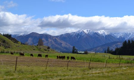 Backpacking with Bacon | Backpacking Travel Blog | New Zealand National Park