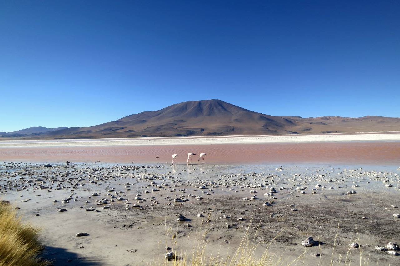 Laguna Colorada | Backpacking with Bacon | UK Travel Blog