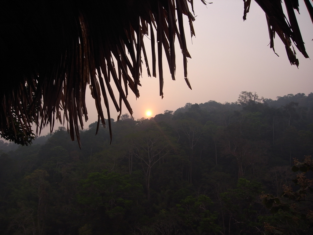 Tarzan Trees   Backpacking with Bacon   Female Solo Travel Blog