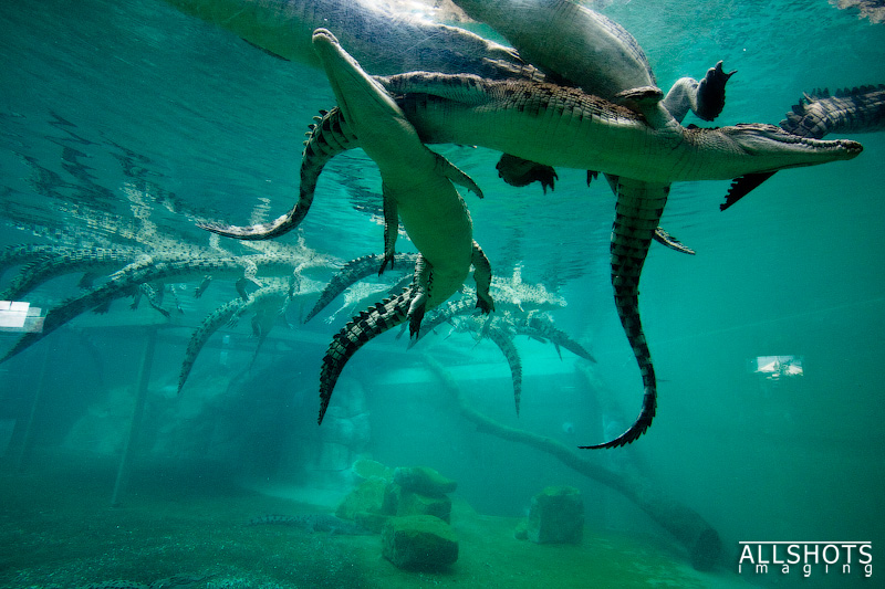 Crocosaurus Cove   Backpacking with Bacon   Female Solo Travel Blog