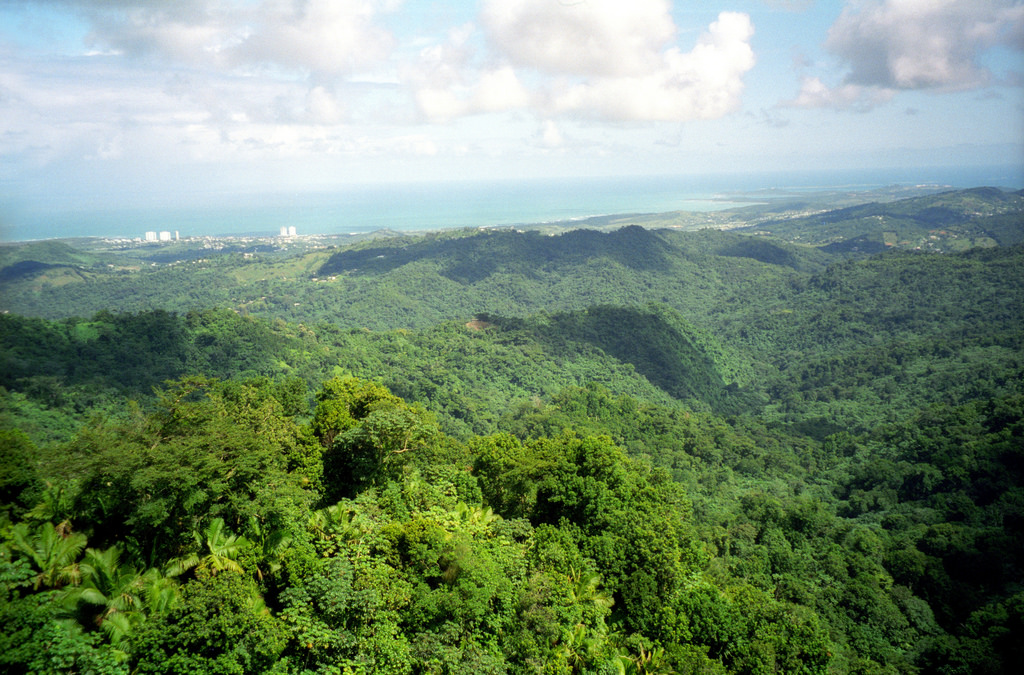 Rainforest | Caribbean Bucketlist | Backpacking with Bacon