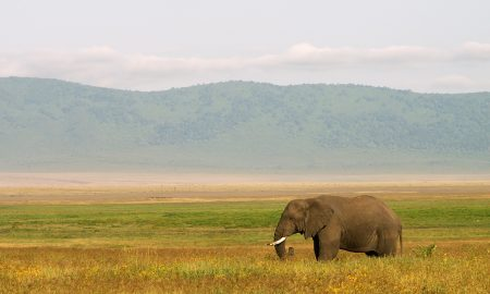 Elephant | Backpacking in Tanzania | Solo Backpacking UK Blog