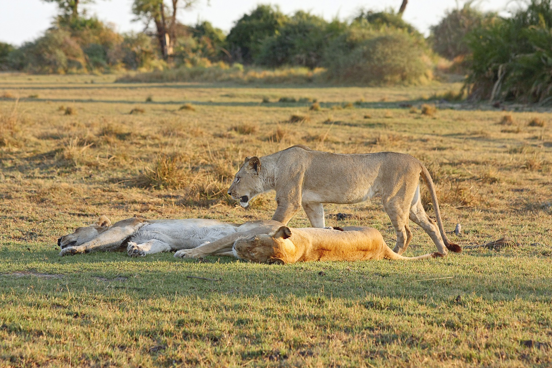 Lions | Backpacking in Tanzania | Solo Backpacking UK Blog