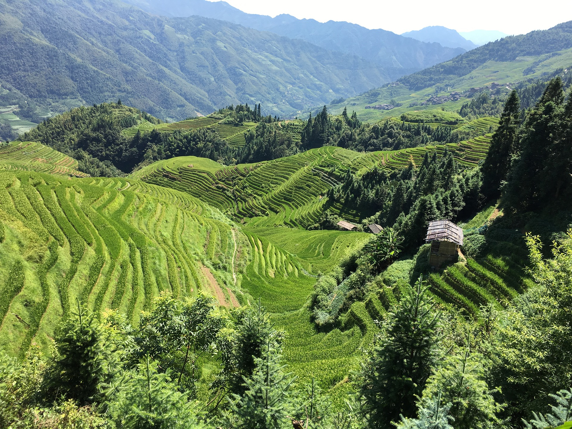 Rice Paddies | Backpacking with Bacon | Solo Travel Blog