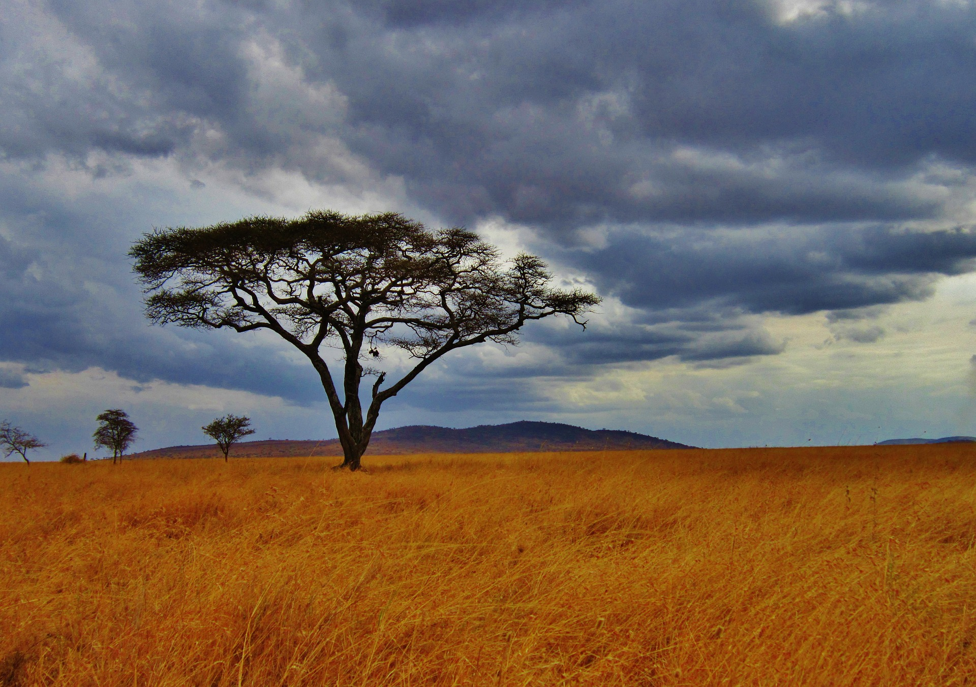 Tanzania Tree | Backpacking with Bacon | Solo Female Travel